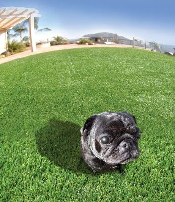 artificial turf pets