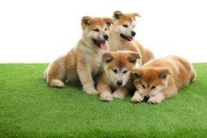 dogs portland